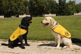 Las personas con diabetes, epilepsia o autismo tendrán derecho a perro guía