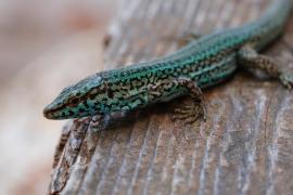 Objetivo preservar anfibios y reptiles