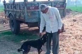 Decepcionado con sus hijos, nombra a su perro heredero
