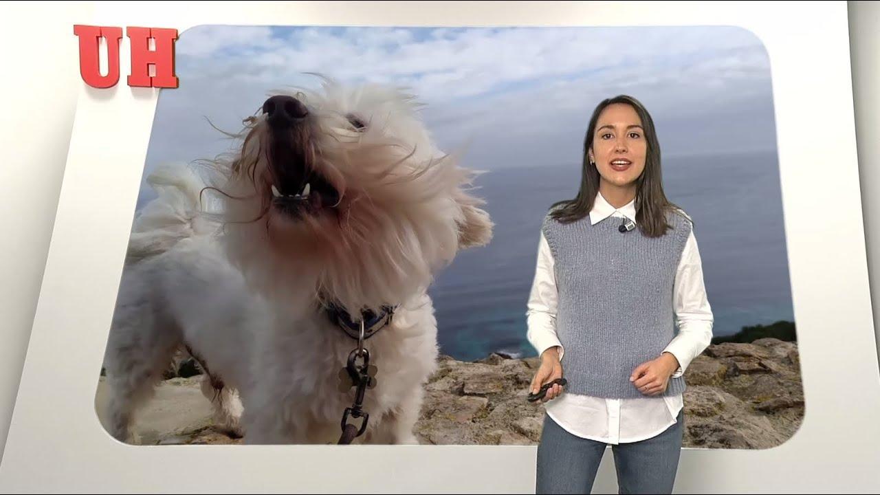¿Cuánto se recomienda pasear al perro?