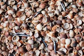 Un enorme vertido obliga al cierre de todas las playas de Israel