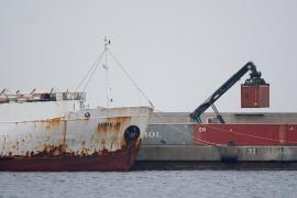 El trágico final de las vacas 'olvidadas' en el buque atracado en Cartagena