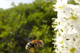 biodivesidad en Baleares