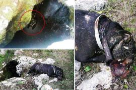 La Guardia Civil investiga la muerte violenta de una perra en Son Rapinya