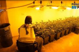 Detenidos tres miembros del clan del Seco por venta de marihuana