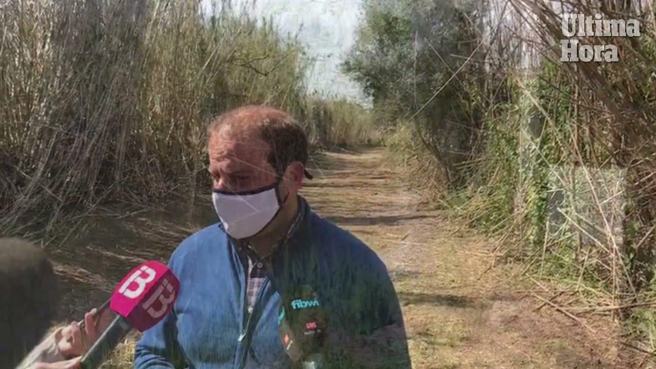 Medi Ambient recupera un camino y un torrente en la zona ampliada de s'Albufera
