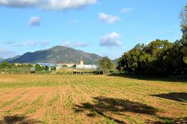 El Ajuntament de Calvià recalificará  una gran parcela todavía sin urbanizar de 17,7 hectáreas