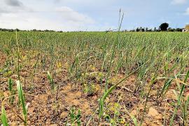Los ganaderos de Campos piden un plan de choque ante las reiteradas sequías