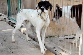 Unos 45 animales de compañía son abandonados cada  día en Mallorca