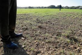 El Govern balear ultima la declaración de sequía en nueve municipios para poder habilitar ayudas