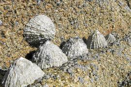 Un estudio relaciona ausencia de 'pagellides' y calentamiento del mar