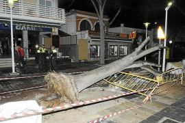 Un árbol cae sobre un cable de alta tensión en Peguera
