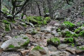Bosque del salt des Freu en Orient