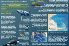 Un gráfico que muestra la importancia del sonido en los océanos