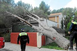 El fuerte temporal de viento provoca daños materiales en Calvià y Ses Salines