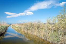 La Albufera cumple 25 años de su declaración como parque natural