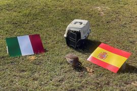 Una perdiz pronostica en Valencia los resultados de la Selección Española en la Eurocopa