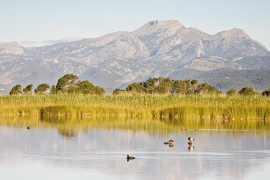 El Parque Natural de s'Albufera celebra este sábado el  25 aniversario de su declaración con actividades gratuitas