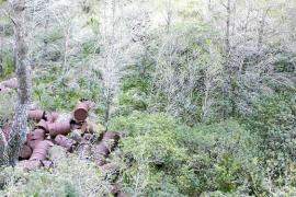 EU denuncia a Fiscalía un vertedero incontrolado de bidones en la zona protegida de Cala Agulla