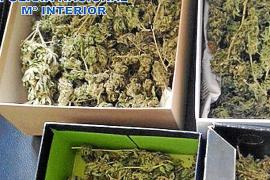 En urgencias por una intoxicación provocada por la plantación de marihuana de su vecino