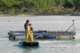 Pescadores y oposición, sorprendidos por la instalación de la piscifactoría