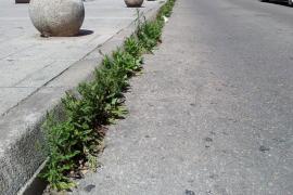 'Jardín botánico' en la Plaza Serralta