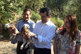 Avanza con éxito la recuperación del águila perdicera en Mallorca