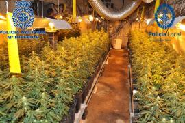 La Policía desmantela una macroplantación de marihuana en Palma y arresta a dos hombres