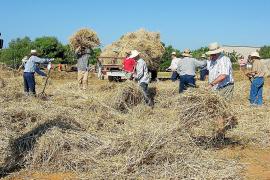 S'Alqueria Blanca revive los antiguos oficios rurales en la Fira des Segar i es Batre