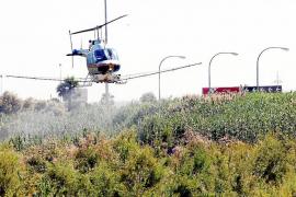 Cort presenta los nuevos medios de control de plagas urbanas en Palma