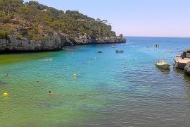 Las altas temperaturas tiñen de verde las aguas de Cala Santanyí