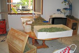 La Guardia Civil halla 14 kilos de marihuana en una vivienda embargada de Algaida