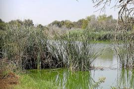 El futuro centro de observación de aves de Binissalem, pendiente de los recortes