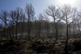 Incendio forestal en Sa Coma Calenta de Andratx, en Mallorca