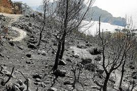 Las patronales reclaman un plan para reforestar la zona del incendio