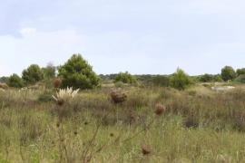 El PSOE pide que el gasoducto Son Reus-Inca-Alcúdia no destroce las zonas protegidas