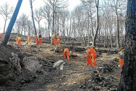 El Ajuntament de Andratx y el GOB se vuelcan en la recuperación de las zonas quemadas
