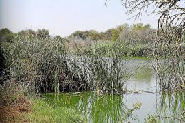 El Govern no financiará el parque para la avifauna previsto en Can Figuera