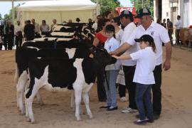 La Fira de Maig convierte Campos en la capital ganadera de Mallorca