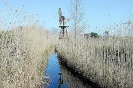 Madrid se preocupa por la conservación de la Albufera y pide explicaciones al Govern