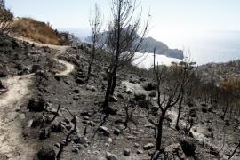 El incendio de la Serra marca una temporada en la que se produjeron la mitad de fuegos que la anterior