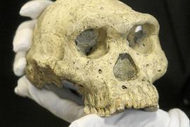 Un cráneo hace replantear la historia de la evolución humana