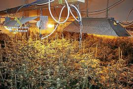 Tres mujeres detenidas por montar un laboratorio de marihuana en s'Arenal