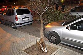El temporal de viento derriba numerosos árboles durante la madrugada en Palma