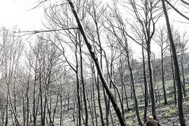 Palma company visita zona afectada incendio andratx foto morey