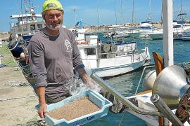 El Govern fija en 30 kilos por barca y día las capturas de 'jonquillo' esta temporada