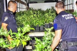 Intervienen 150 plantas de marihuana en una tienda de derivados del cannabis, en Palma