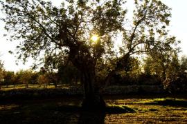 """3º Concurso de fotografía Ultimahora.es - Foto Ruano / Categoría """"verde"""""""