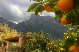 Naranjos y montaña de Es Cornadors en Sóller