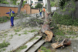 El temporal provoca numerosos incidentes en Mallorca
